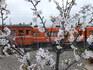 24.4 雲州平田デハ二と桜4.jpg
