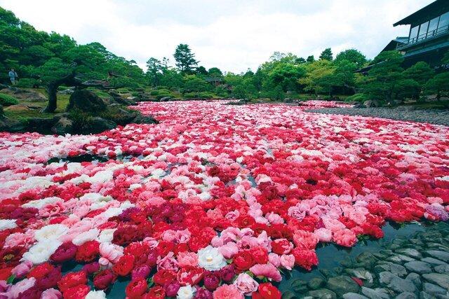 【現地集合/現地解散】日本庭園 由志園 入園&昼食マイカー個人プラン