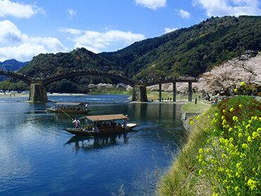 桜に染まる錦帯橋 春の遊覧「さくら舟」 日帰り