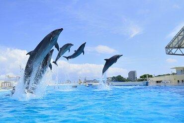 【催行中止】FDAチャーター便で行く めんそーれ!沖縄観光コース
