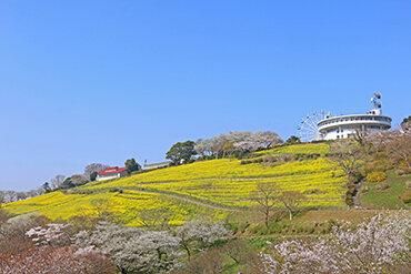 JALで行く 人気ローカル鉄道いすみ鉄道乗車 お花見房総の旅